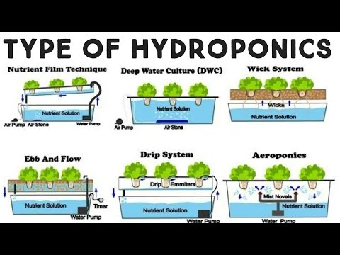 history and growth of hydroponics