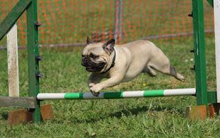 best basic dog training