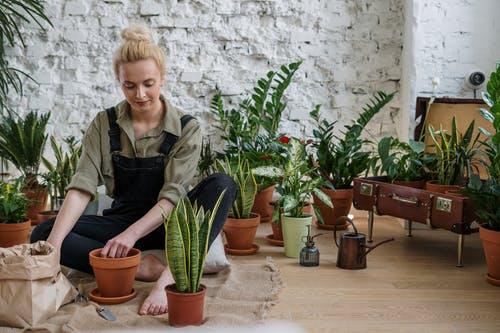 best gardening tips